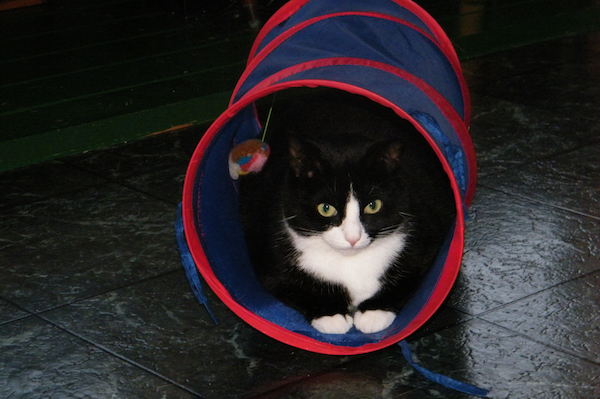 a black and white cat in a play tunnel