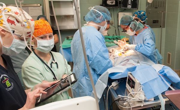 veterinary operating theatre with seven surgical staff members