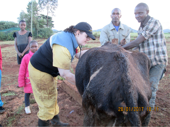 A UPEI vet student (Terra Macdonald) examining a cow in Kenya,  with the family watching
